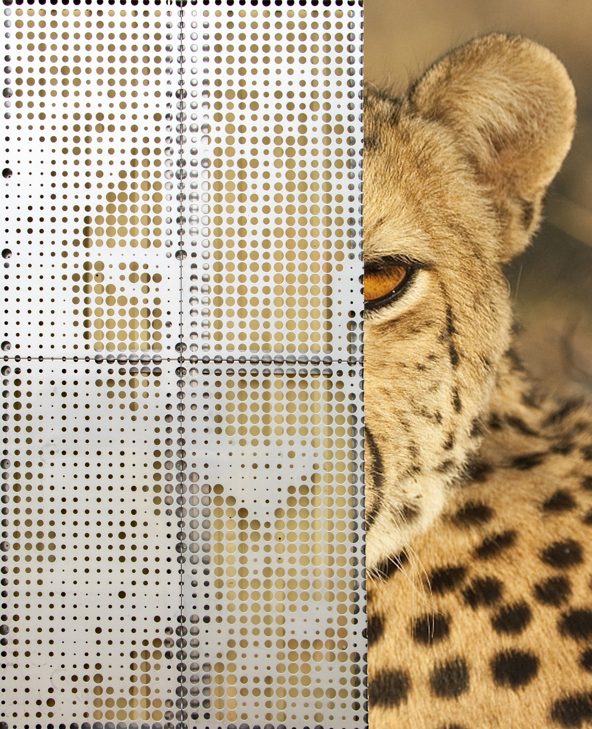 IMAGEWALL PROLOGUE ENABLES ARCHITECTS AND DESIGNERS TO APPLY IMAGERY TO METAL THROUGH THE USE OF PRECISE PERFORATIONS.